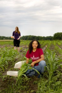 Conducting corn research at the University Farm